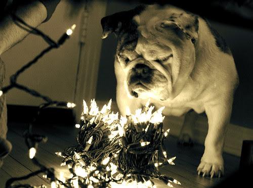 Ooooooo, exciting lights!