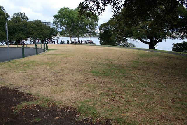 Mrs Macquaries Point Lawn