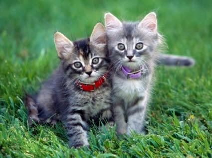 750+ Download Gambar Hewan Kucing Terbaik