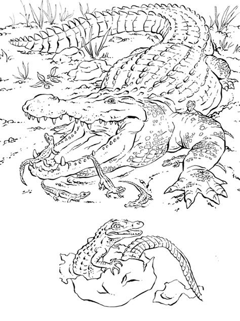 florida animals coloring pages   print
