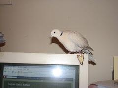 Dove on my PC