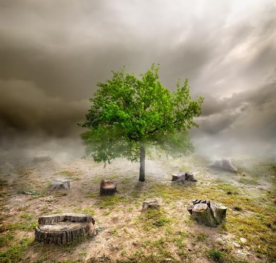 O desmatamento ainda é o principal responsável pelas emissões nacionais. Foto: Shutterstock