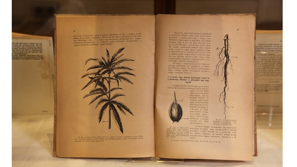 Museo del Cannabis de Barcelona