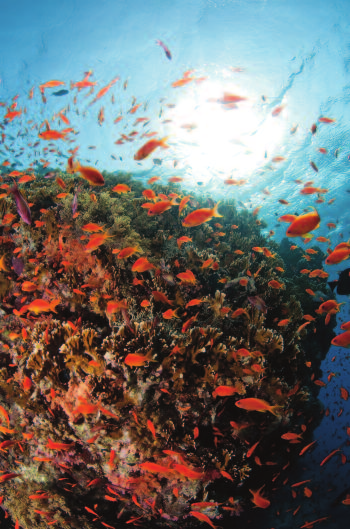 Morze Czerwone jest sprawdzoną atrakcją dla klientów w Egipcie