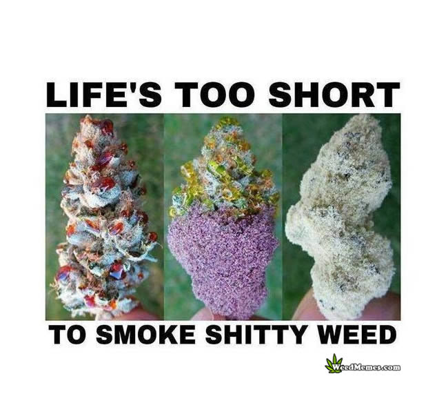 Lifes Too Short To Smoke Shitty Weed Quote Weed Memes