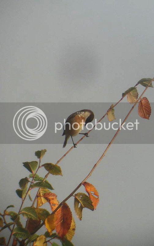 photo IMG_4980.jpg