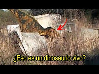 Dinosaurio REAL es Captado en VÍDEO