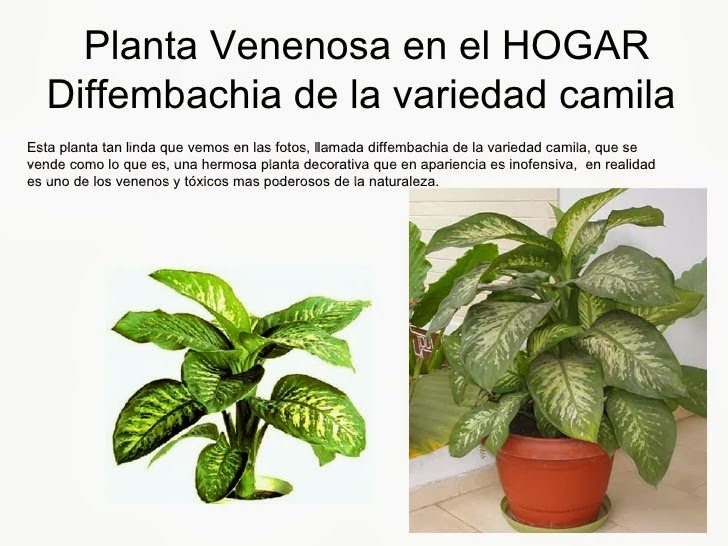 Imagenes De Plantas Venenosas Imágenes