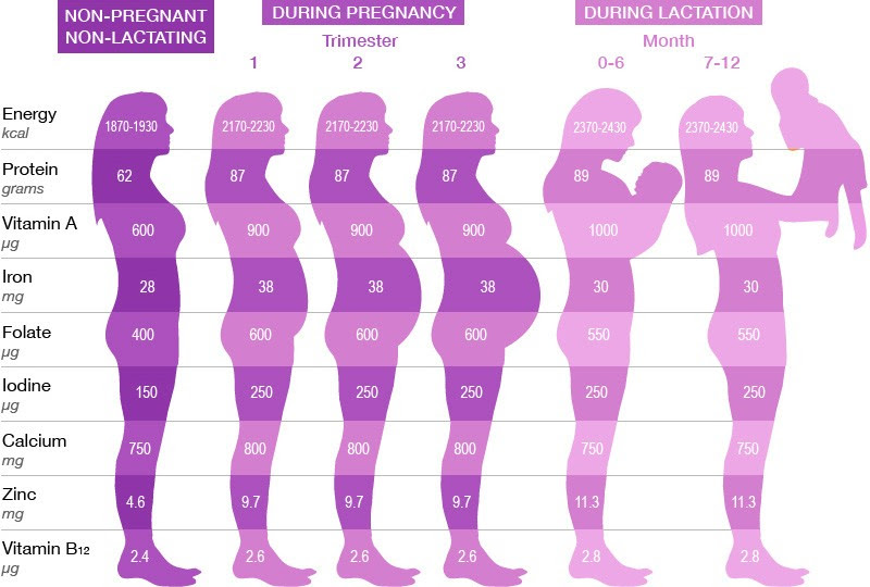 How Much Should Baby Weigh At 24 Weeks Pregnant - Baby Viewer