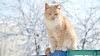 Todo lo que tienes que hacer para el bienestar del gato en invierno
