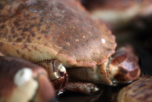 Crab shell close