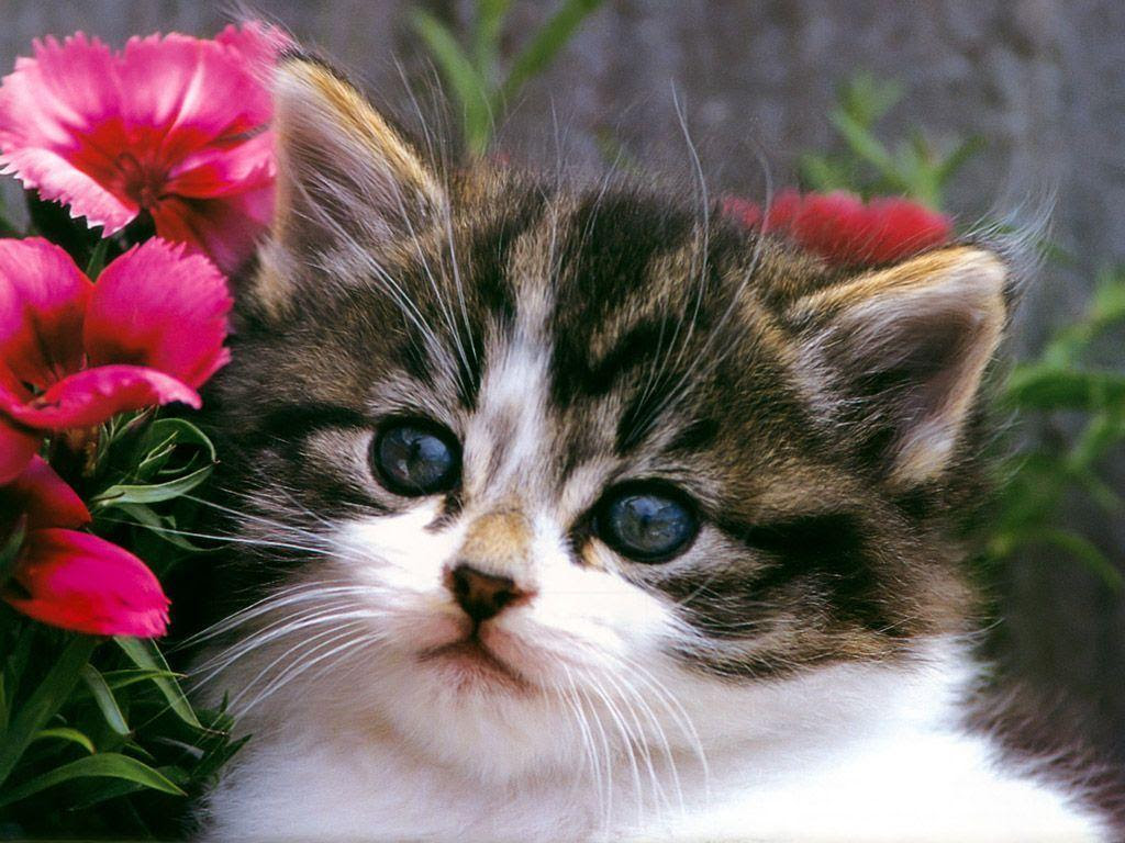 Adorable Cats Wallpapers Cute Cat Wallpaper Iphone 2018 Iphone Wallpapers