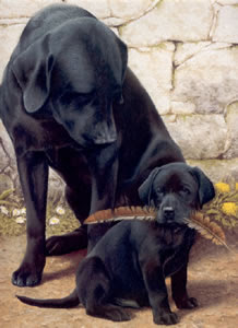 Like Father Like Son By Nigel Hemming Price Email To Buy