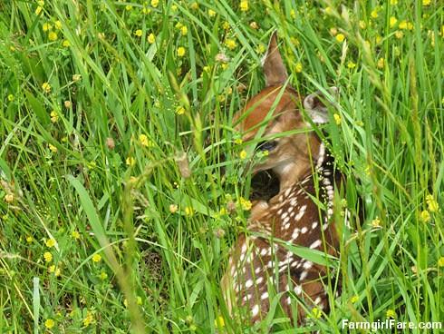 (28-1) Tiny fawn in the hayfield - FarmgirlFare.com