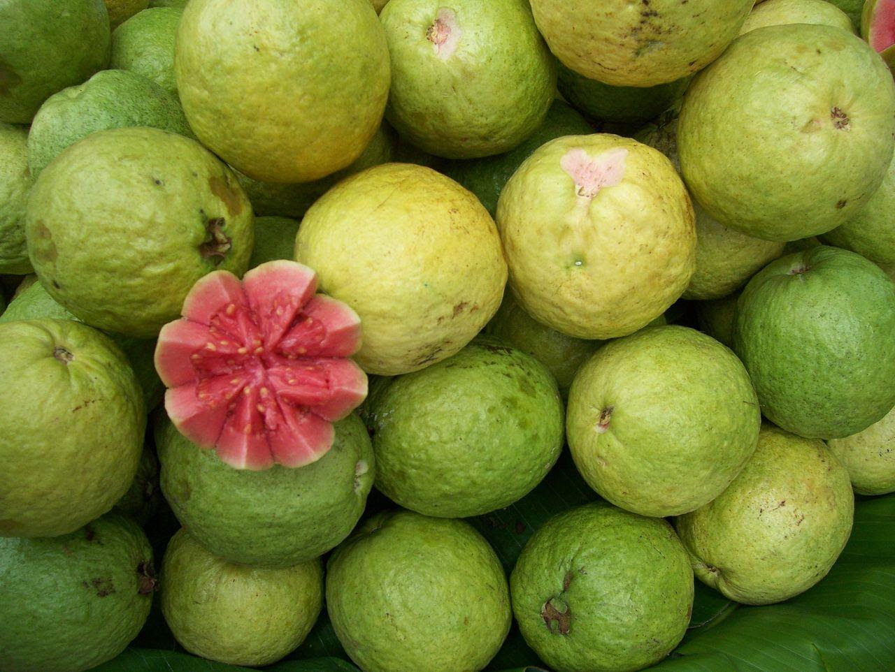 Their Majesties Guava and Guava Leaves and Their Medicinal Benefits