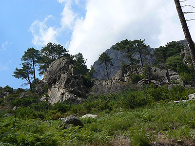 paysage restonica 1.jpg