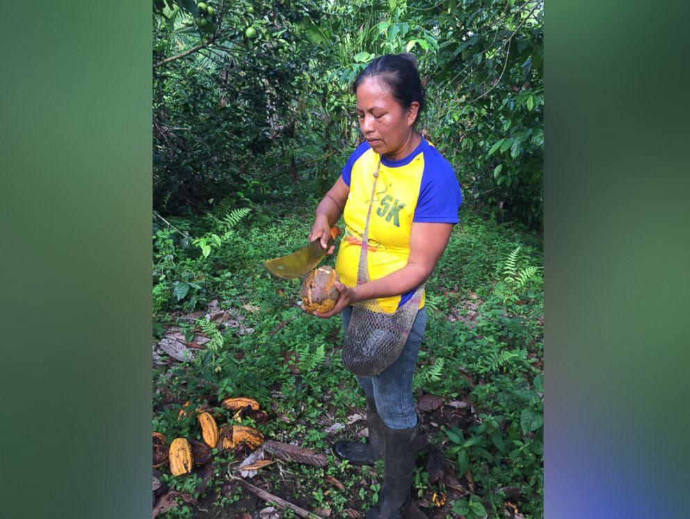 Foto: Entre os 3.000 agricultores colhendo as folhas é uma mulher chamada Ruth, que corta os fardos de folhas de Guayusa com um facão todos os dias.