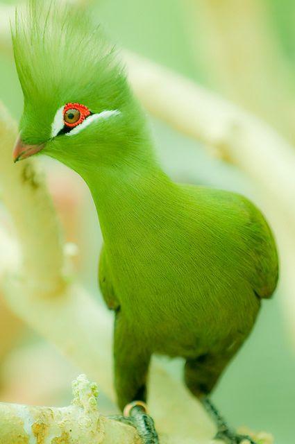 bird, 4