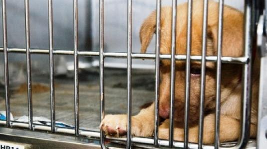Χωρίς άδεια λειτουργίας πολλά  καταστήματα pet shop της Κρήτης