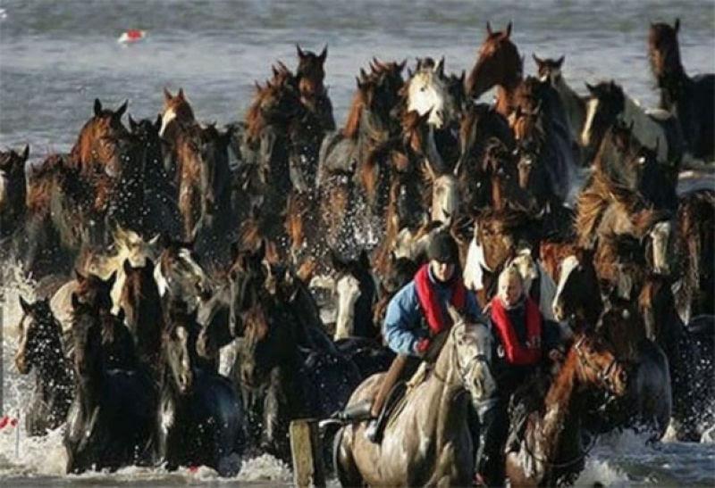 7 heróicas mulheres fizeram o impossível para salvar 200 cavalos presos em uma ilha