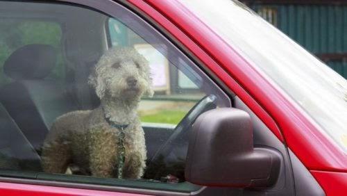 Dejan a un perro encerrado en un auto caliente, muchos se indignaron hasta que leyeron el cartel