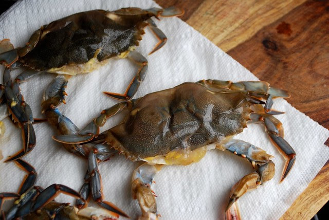 raw soft-shell crabs