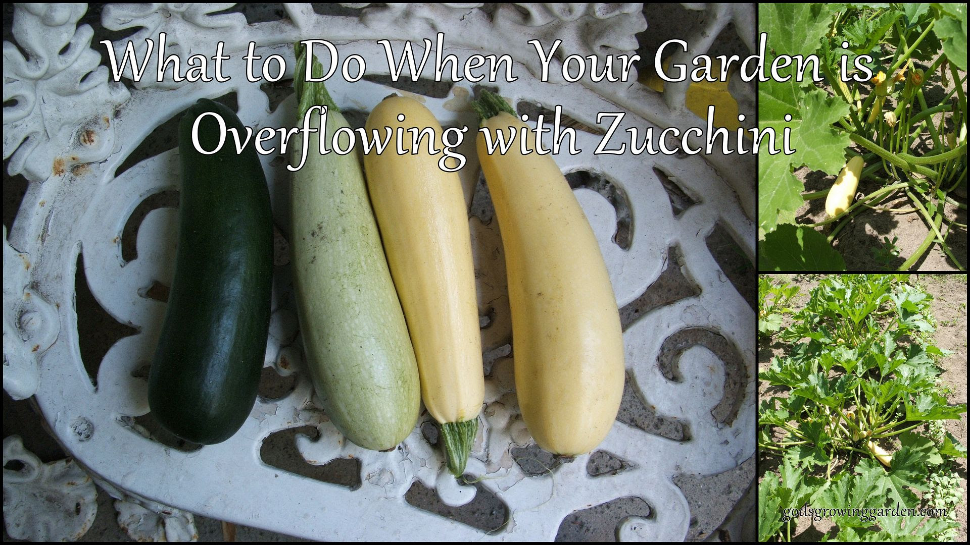 by Angie Ouellette-Tower for http://www.godsgrowinggarden.com/ photo 2012-08-02_zpsgmzdryrt.jpg
