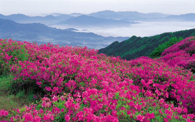 Hd Empapelado Con Flores De Colores 3 1440x900 Fondos De Descarga