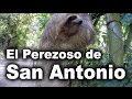 El Perezoso de San Antonio de Los Altos