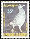 Djibouti Francolin Pternistis ochropectus