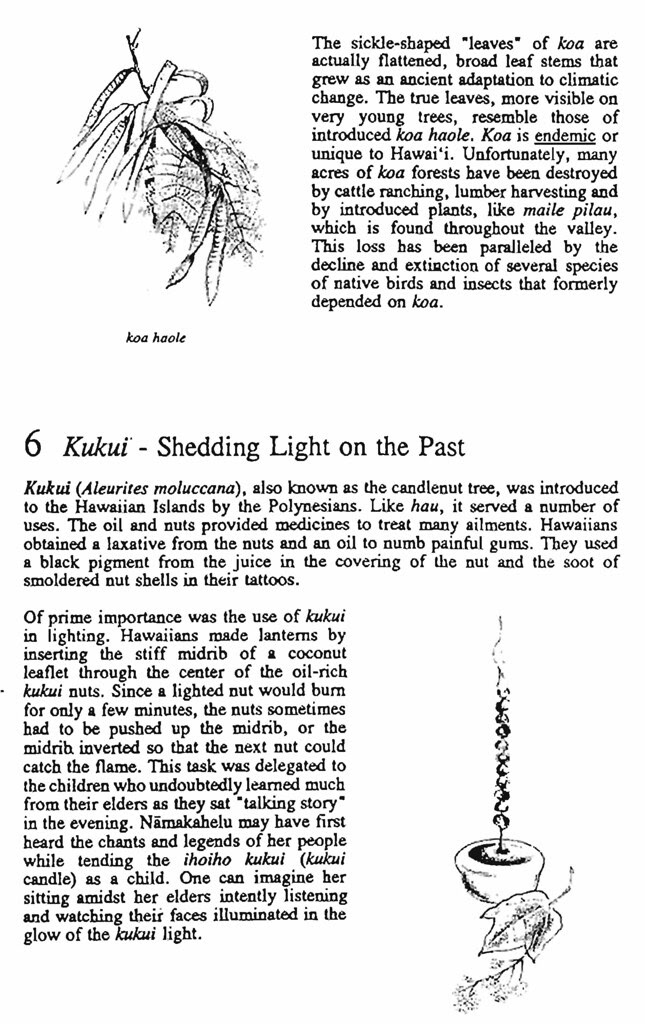 Pages from A_Walk_Into_the_Past_Page_05
