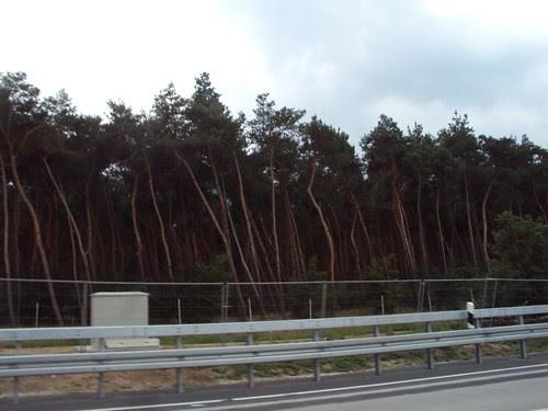 Trees along the German Highways