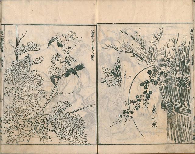 Eiichi Butterfly Book dl.ndl.jp - 4