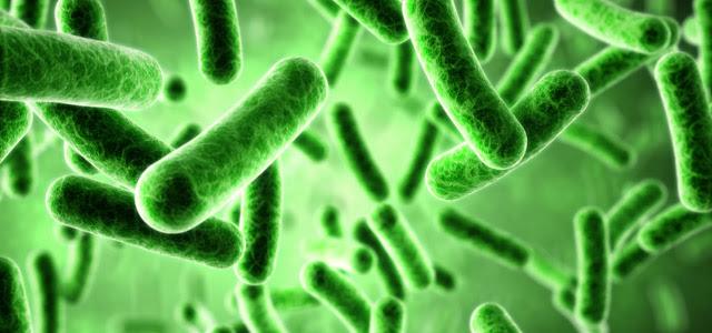 manfaat bakteri bagi kesehatan
