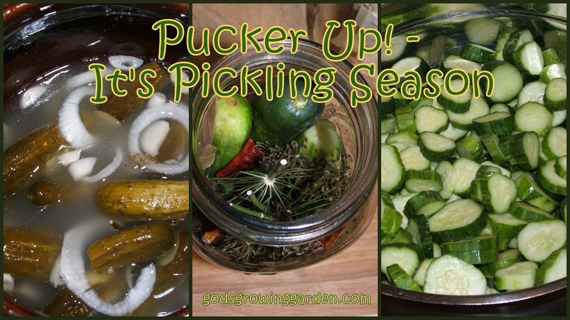 Pickles by Angie Ouellette-Tower for godsgrowinggarden.com photo BlogStuff_zpsc34aae84.jpg