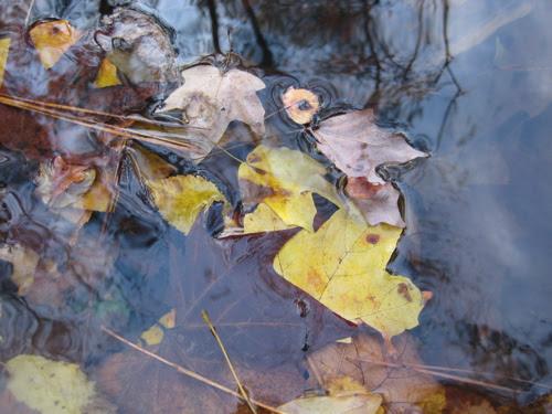 leaves in stream