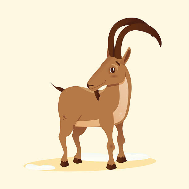 Top 60 Ibex Clip Art Vector Graphics And Illustrations