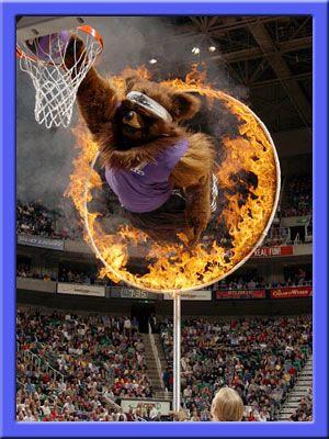 Bear fire