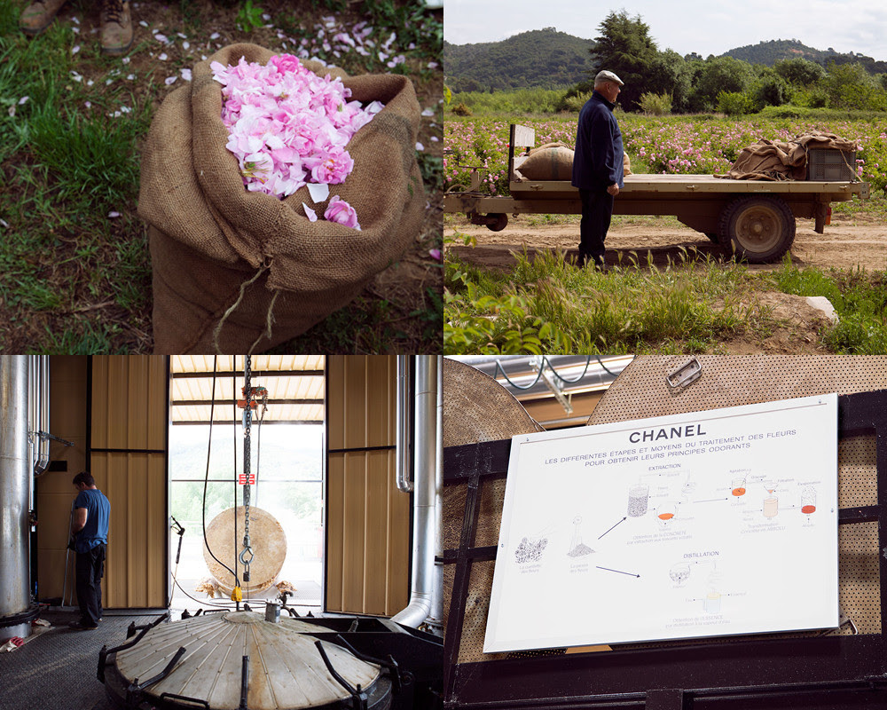 CLOCKWISE FROM TOP LEFT A burlap sack of May roses. Joseph Mul in his fields. The Sotraflor processing plant. The petals exit the factory to be turned into compost.
