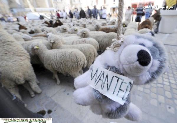 مظاهرة الخرفان