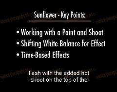strobist_dvd_bonus_sunflower_1