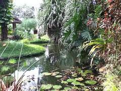 week 23-7 (pond)