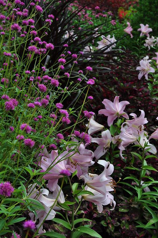 Flower Garden Walk (12)