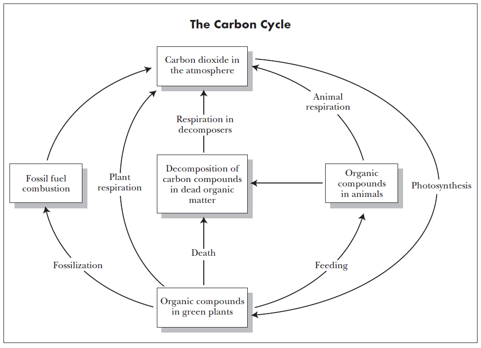 la_Carbon_Cycle