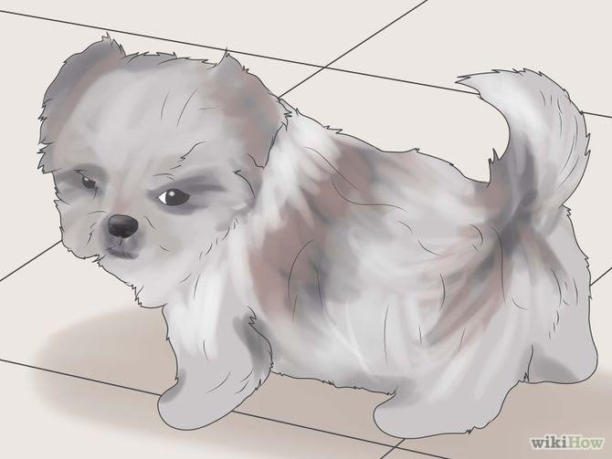 How To Potty Train My Shih Tzu Puppy Best Training Methods Dogs