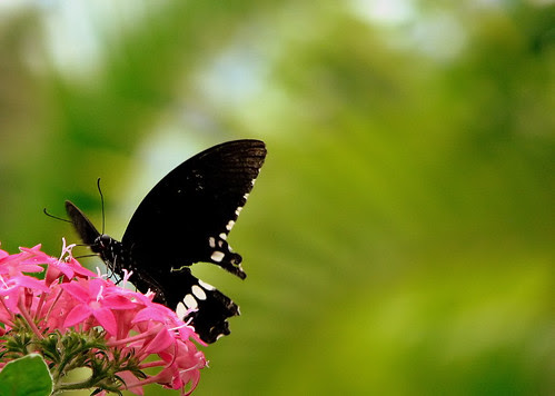 """I love flowers.."" says butterfly :)"