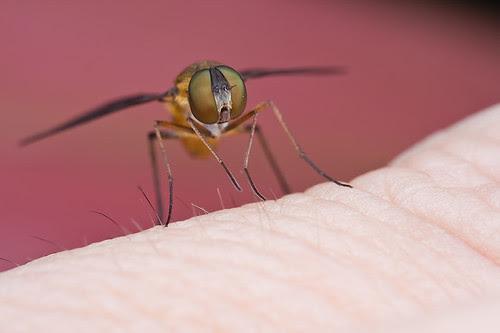 macro photography tip Bee fly on hand........IMG_2186 copy