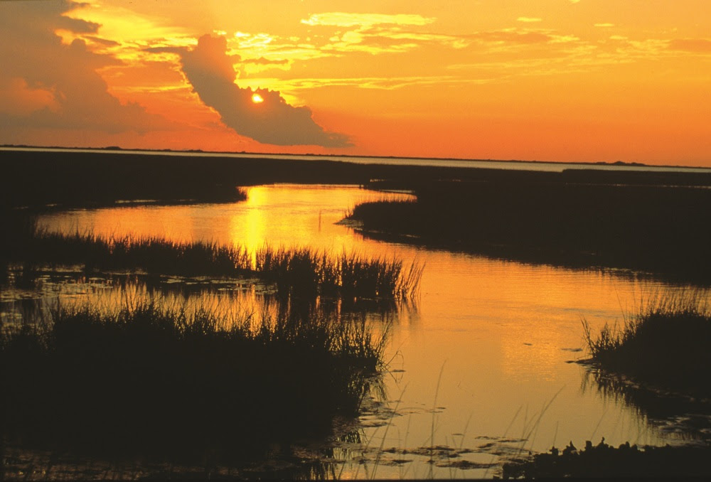 Estuaries and Bays