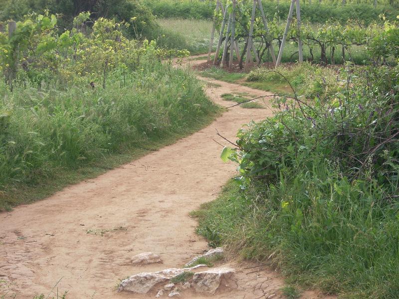 The path to Podbrdo