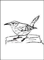 Coloring Page Wren Coloring Pages